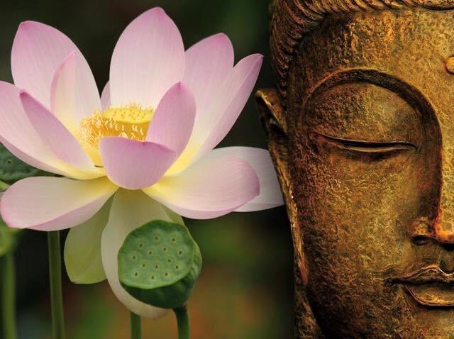 Training di Meditazione: La Pratica della Presenza